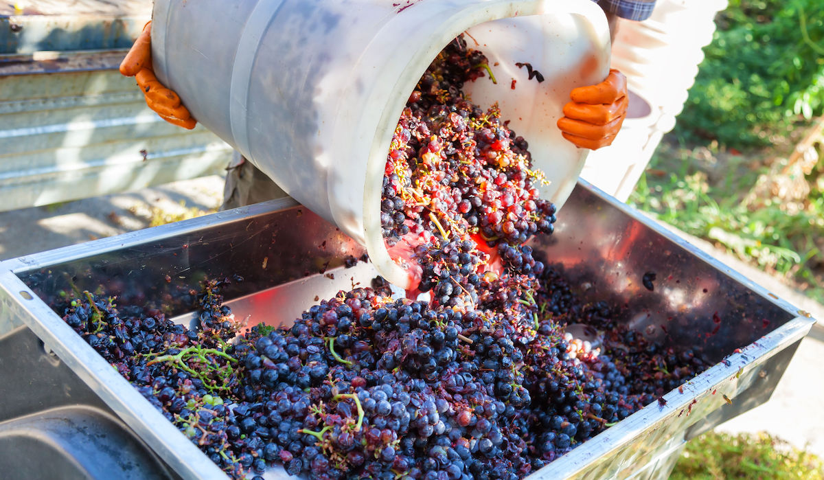 Sustainable Wine Making Vineyard Earth Day
