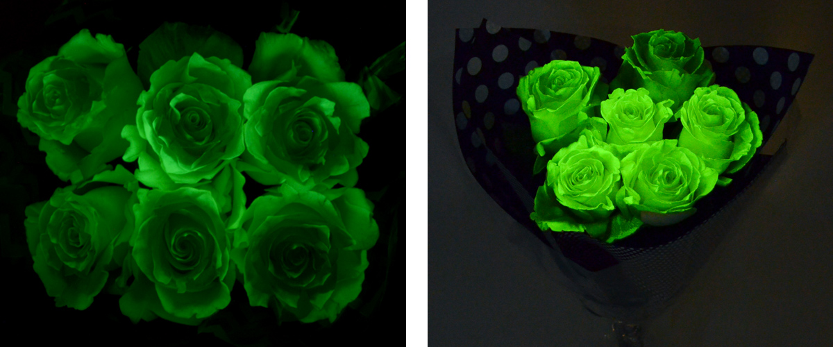 Find glow in the dark roses in our weekly ad.